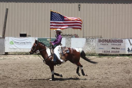 Sport Horses